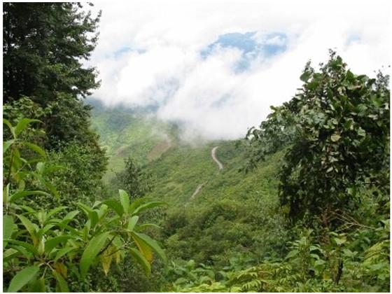 Bosque Nubuso