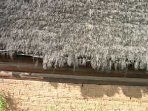 Roof with pine needle thatching